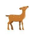 graceful fallow sika roe deer wild animal cartoon vector image vector image