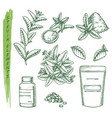 sketch stevia plant and pills scoop and pack vector image vector image