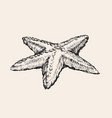 starfish hand drawing sketch vector image