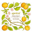 apricot elements set vector image