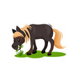 lovely pony eating green grass little black horse vector image vector image