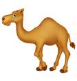 Cute camel cartoon character vector image vector image