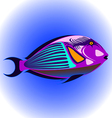 exotic fish1 vector image vector image