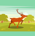 spotted deer with antlers wild animal amongst a vector image