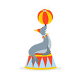 circus sea cat seal is standing on podium vector image