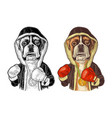 dog boxer dressed in human in robe gloves vector image