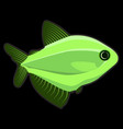light green fish on black background vector image vector image