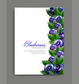 lliustration with realistic blueberries isolated vector image vector image