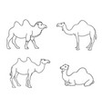 camels in contours vector image vector image