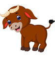 cute baby bull cartoon vector image vector image