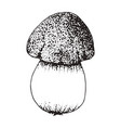 mushroom sketch isolated on white background vector image