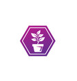plant in pot with some leaves for logo design vector image