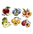 sketches of apple and pear plum apricot fruits vector image vector image