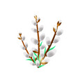 willow bunch isolated on a white background vector image vector image