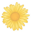 beautiful yellow daisy flower with effect vector image vector image