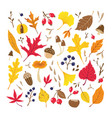fall colorful leaves berries seeds and mushrooms vector image vector image