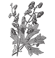 Flower of Monkshood engraved vector image vector image