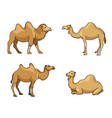 camels in cartoon style with outlines vector image