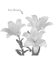 Bouquet of yellow lilies in black and white vector image