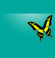 butterfly with black wings yellow patterns vector image