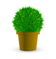 cactus in a pot on white vector image vector image
