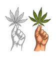 male hand holding marijuana leaf engraving vector image