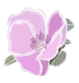 Flower of a dogrose vector image vector image