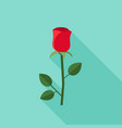 rose flat icons vector image