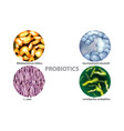 four popular types of bacteria probiotics vector image vector image