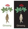 ginseng root set vector image