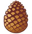 pine cone vector image