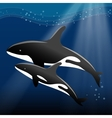 Whale and her calf swimming in the ocean vector image