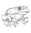 Frog outline vector image