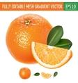 Orange on white background vector image vector image