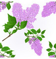 seamless texture lilac twigs vector image vector image