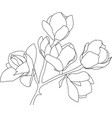 sketch blossoming magnolia black on white vector image vector image