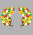 human kidneys human organs with flowers medical vector image vector image