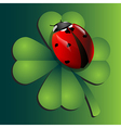 Ladybug on clover vector image vector image