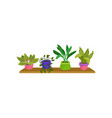 flat set of 4 houseplants in colorful vector image