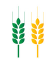green and golden wheat vector image vector image