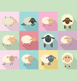 sheep cute lamb farm iicons set flat style vector image
