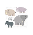 wild animals design vector image