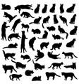cats silhouette set kitten in different pose vector image
