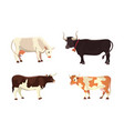 different cows isolated vector image vector image