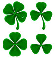 set of green leaves of clover shamrock and vector image vector image