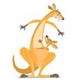 Two funny kangaroos vector image