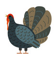 turkey on a white background vector image