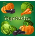 Vegetable set cabbage eggplant carrot pumpkin vector image