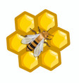 a bee sits on honeycombs graphics isolated vector image