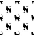 british shorthair icon in black style isolated on vector image vector image